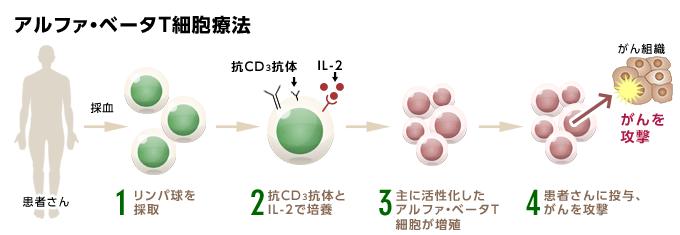 アルファ・ベータT細胞療法