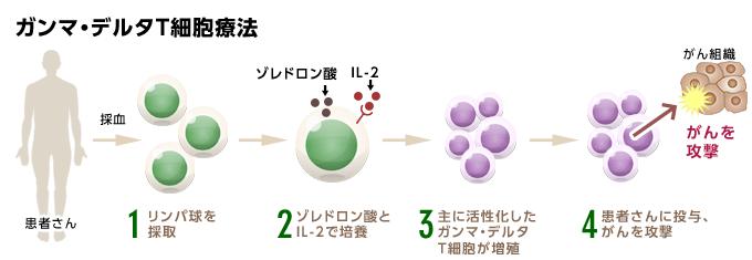 ガンマ・デルタT細胞療法