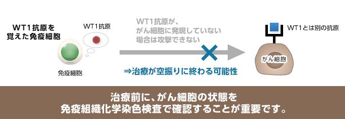 WT1分子が発現していないと判明した場合は、WT1による樹状細胞ワクチン治療の効果は望めません。