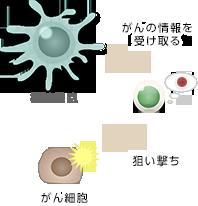 樹状細胞ワクチン療法
