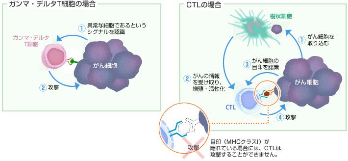 ガンマ・デルタT細胞ががんを攻撃するしくみ 瀬田クリニックグループ