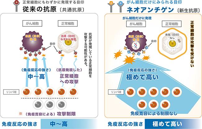 従来の樹状細胞ワクチンとの違い